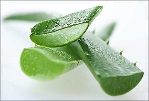 Organic Facial Scrub by HoneySkin Organics